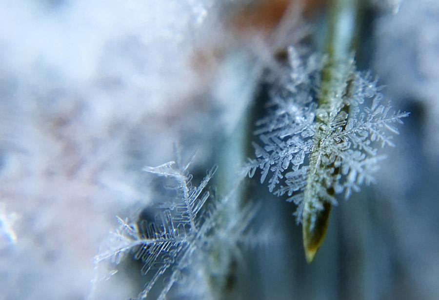 フリー写真 葉の上の雪の結晶