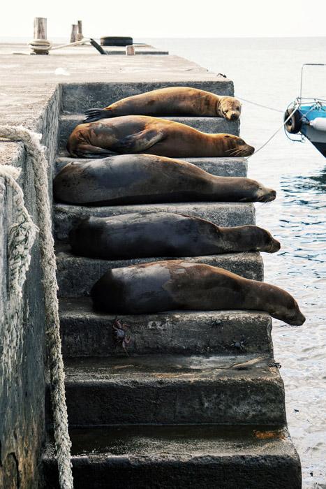 フリー写真 階段で寝ているアシカたち