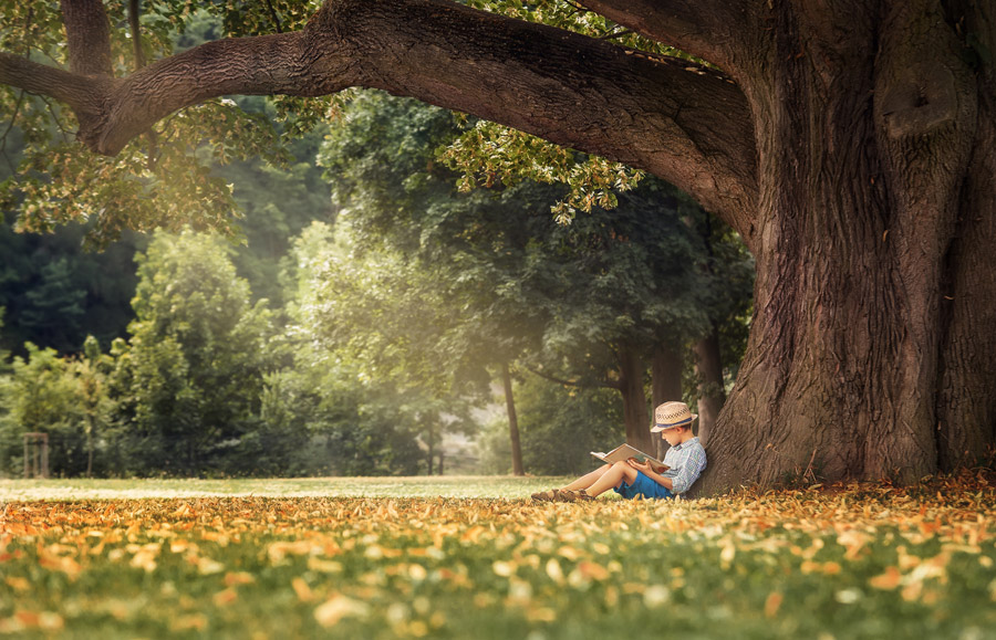フリー写真 木の前で本を読んでいる男の子