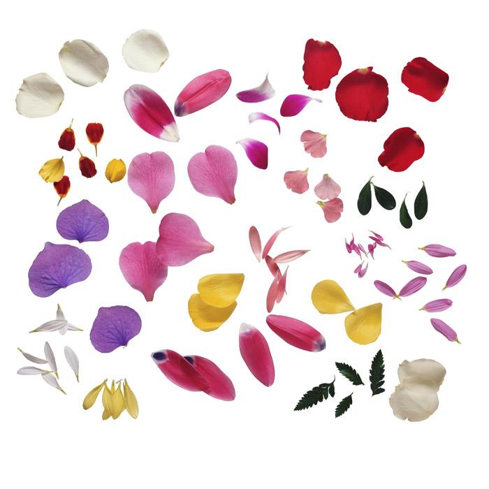 フリー写真 色々な花びらのセット