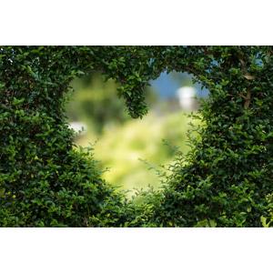 フリー写真, 植物, 植木, ハート, 緑色(グリーン)