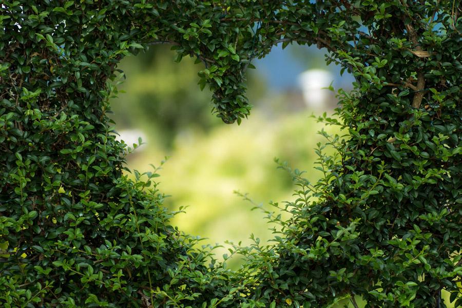 フリー写真 ハートの形をした植木