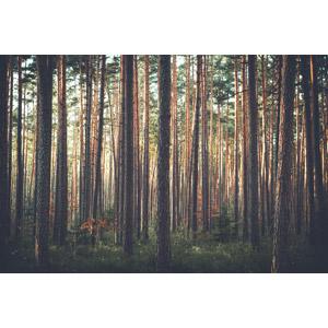 フリー写真, 風景, 自然, 森林, 樹木, ドイツの風景