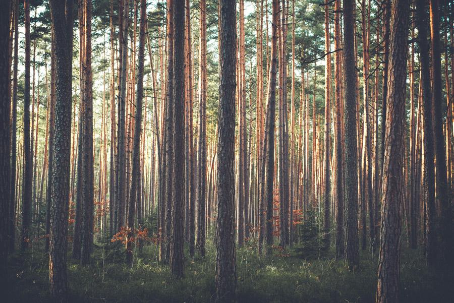 フリー写真 ドイツの森の木々の風景