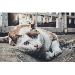 フリー写真, 動物, 哺乳類, 猫(ネコ)