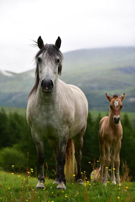 フリー写真 並んで立っている馬の親子