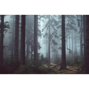 フリー写真, 風景, 自然, 森林, 樹木, 霧(霞), チェコの風景