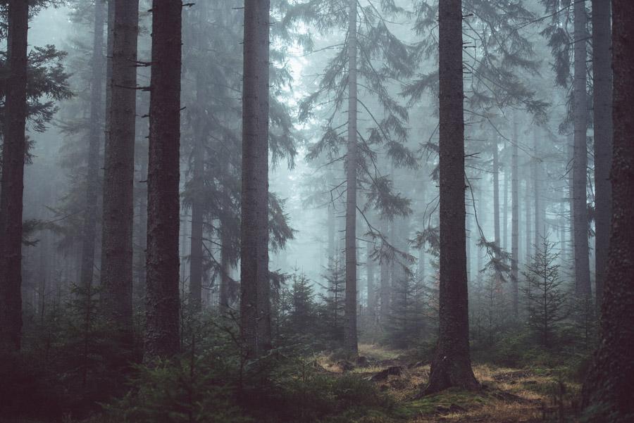 フリー写真 シュマヴァ国立公園の霧に包まれた森の風景
