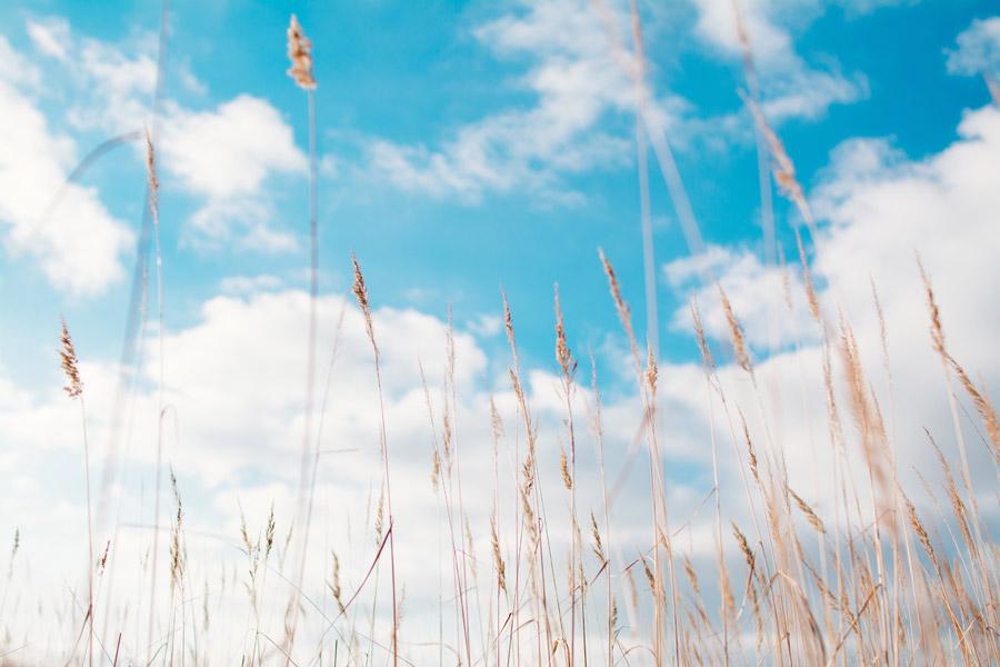 フリー写真 枯れ草と空の風景