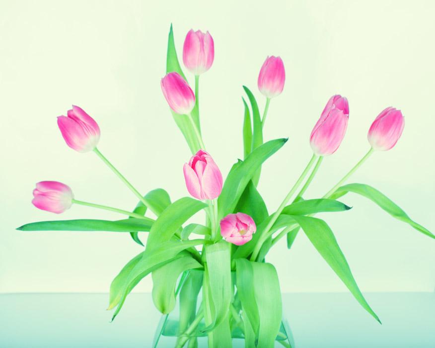 フリー写真 花瓶のチューリップ