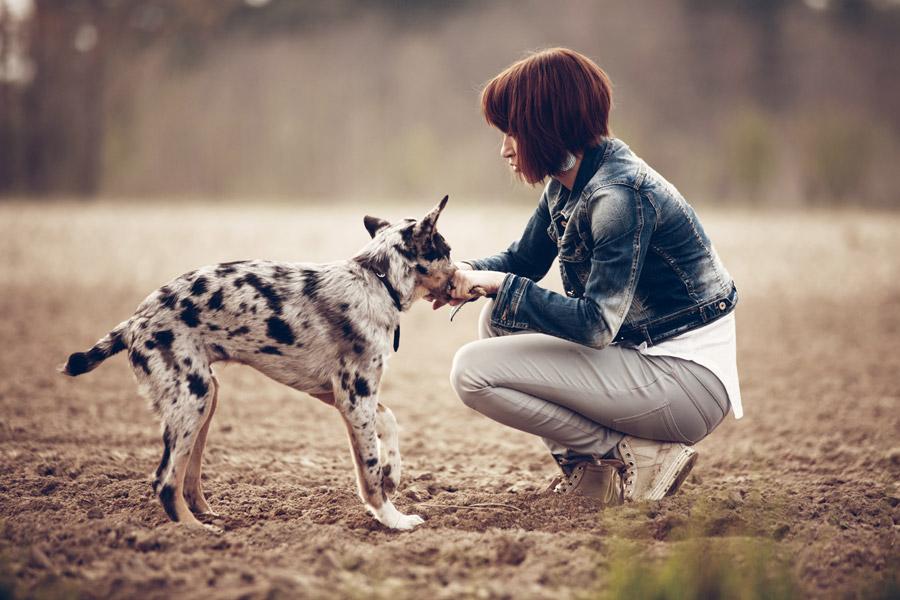 フリー写真 子犬と外国人女性