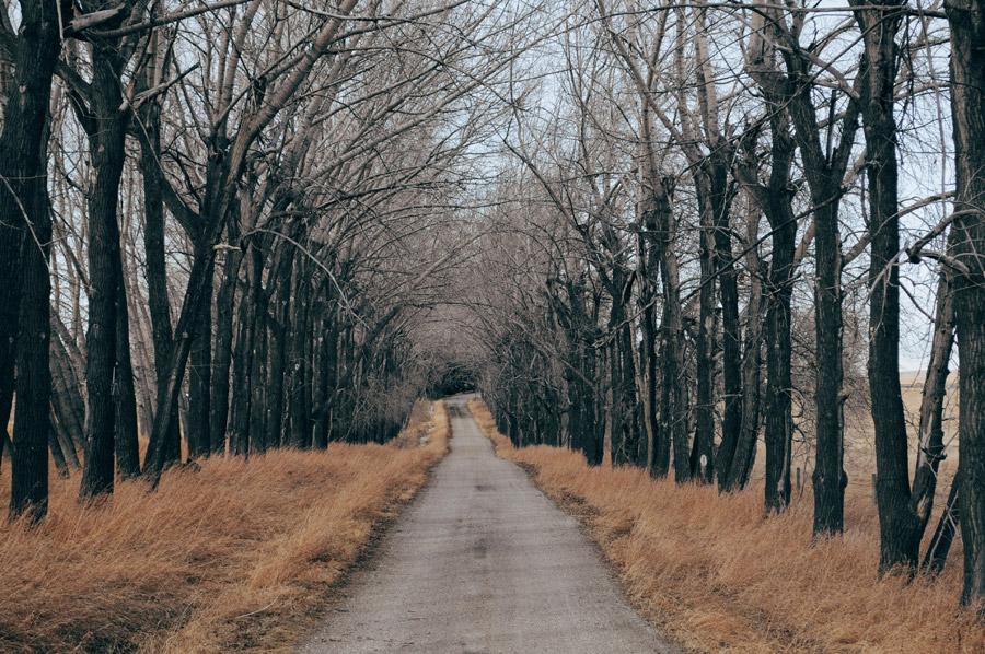 フリー写真 田舎の並木道の風景