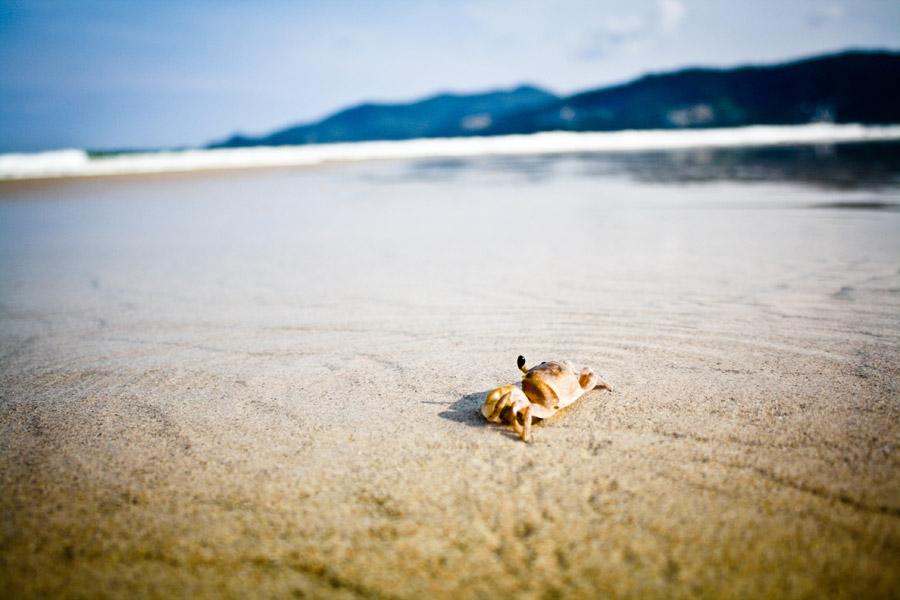 フリー写真 プーケットの砂浜とカニ