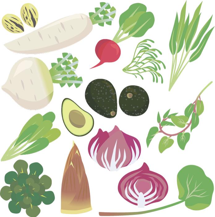 フリーイラスト アボカドやタケノコやダイコンなどの野菜のセット