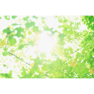 フリー写真, 風景, 自然, 木漏れ日, 太陽光(日光), 植物, 葉っぱ, 緑色(グリーン)