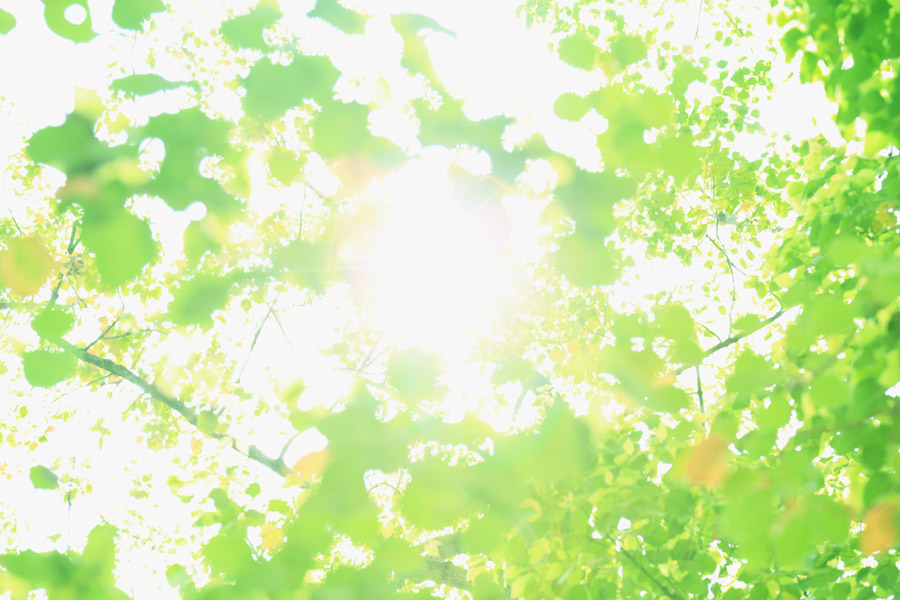 フリー写真 緑の葉と木漏れ日
