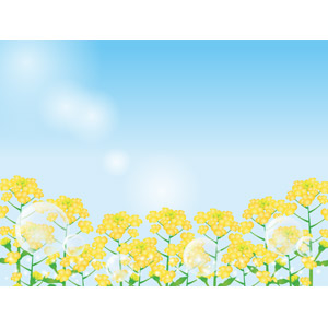 フリーイラスト, ベクター画像, AI, 風景, 青空, 植物, 花, 菜の花, 花畑, 菜の花(アブラナ), 黄色の花, 春, しゃぼん玉(シャボン玉)