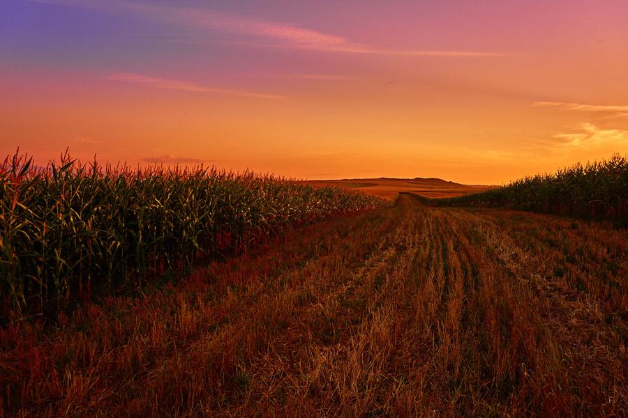 フリー写真 ルーマニアの夕焼けと畑