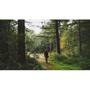 フリー写真, 風景, 森林, 人と風景, 後ろ姿, 樹木
