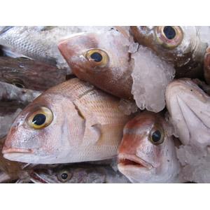 フリー写真, 食べ物(食料), 魚介類, 魚(サカナ)