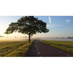 フリー写真, 風景, 道路, 牧草地, 樹木, 霧(霞), 田舎, オランダの風景