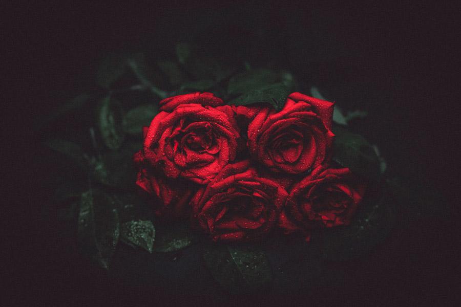 フリー写真 水にぬれた赤いバラの花