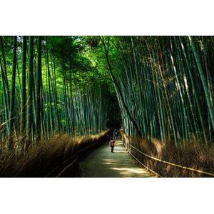 フリー写真, 風景, 竹林, 竹(タケ), 小道, 日本の風景, 京都府