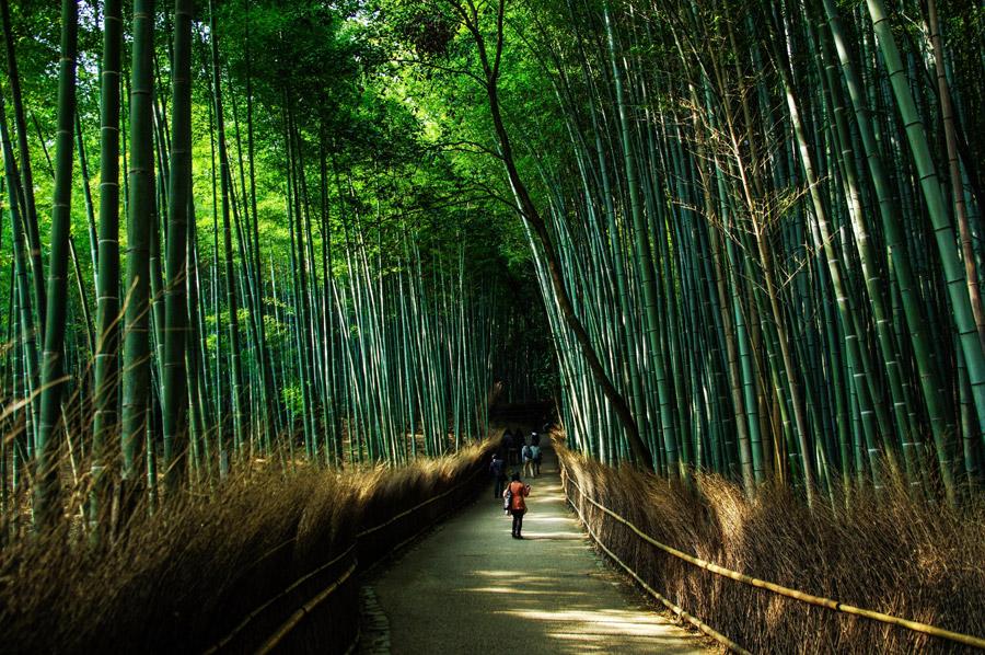 フリー写真 嵐山・嵯峨野の竹林の小径