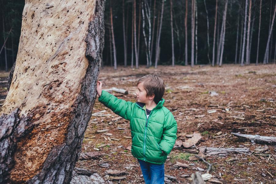フリー写真 木に手をついている男の子