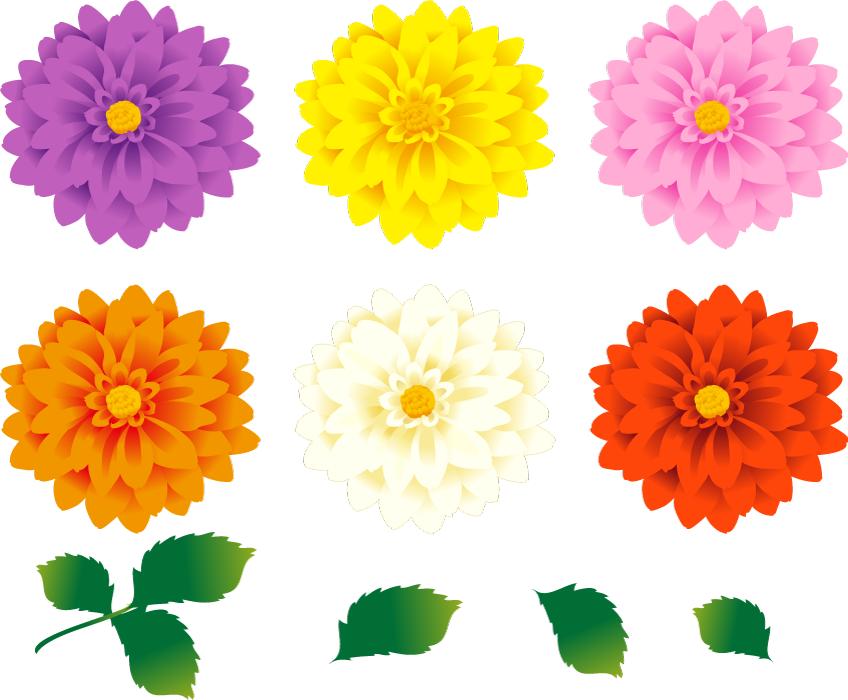 フリーイラスト ダリアの花と葉のセット