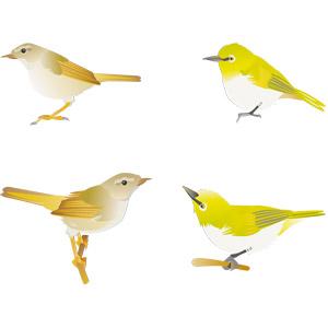 フリーイラスト, ベクター画像, AI, 動物, 鳥類, 鳥(トリ), 鶯(ウグイス), メジロ, 春