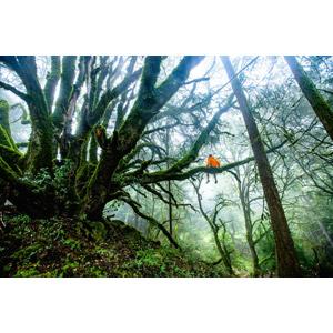 フリー写真, 風景, 人と風景, 森林, 樹木, 後ろ姿, 霧(霞)