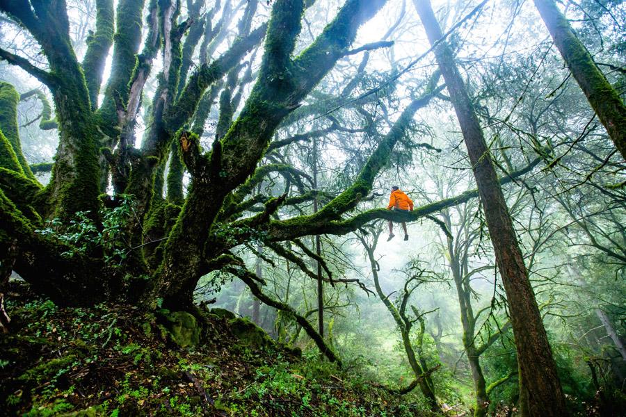 フリー写真 森の木の枝に座る人物