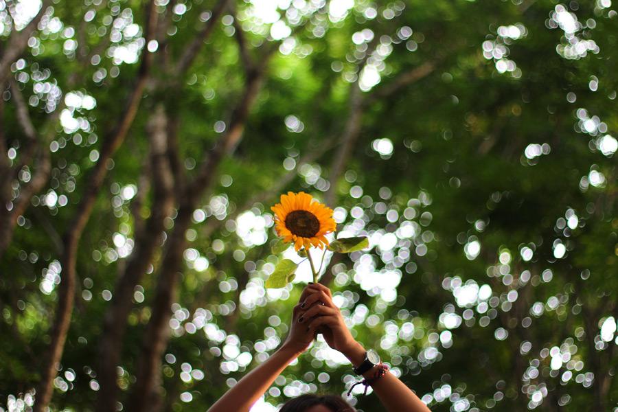 フリー写真 掲げたヒマワリの花
