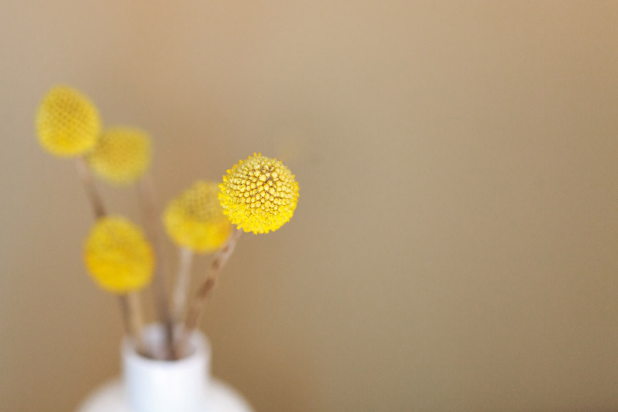 フリー写真 花瓶に生けられたクラスペディアの花