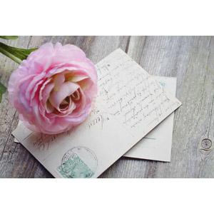 フリー写真, 葉書(はがき), 花, 薔薇(バラ)