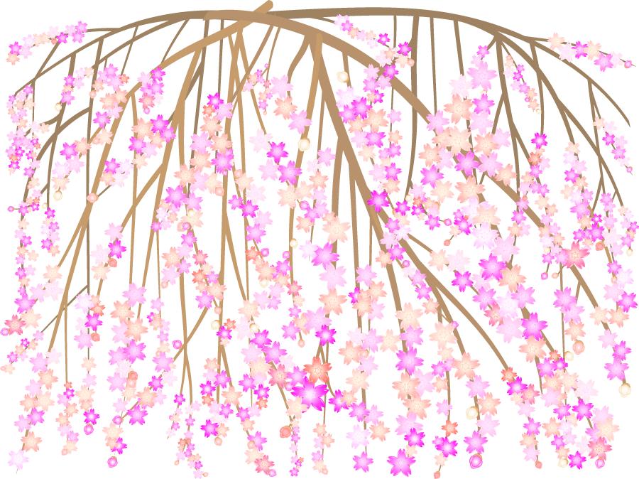 フリーイラスト しだれ桜の背景
