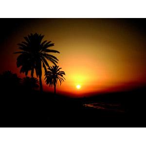 フリー写真, 風景, 自然, 夕暮れ(夕方), 夕焼け, 夕日, 樹木, 椰子(ヤシ), 南国, チュニジアの風景, リゾート, バカンス