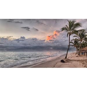 フリー写真, 風景, ビーチ(砂浜), 海, 樹木, 椰子(ヤシ), 南国, リゾート, バカンス, ドミニカの風景, カリブ海