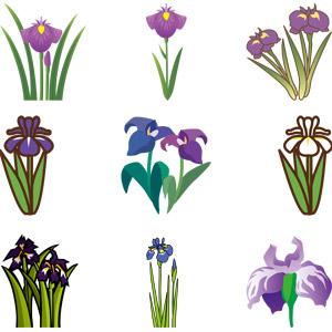 フリーイラスト, ベクター画像, AI, 植物, 花, アヤメ(ハナショウブ), 紫色の花, 年中行事, 端午(菖蒲の節句), こどもの日, 5月, カキツバタ