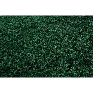 フリー写真, 風景, 自然, 草むら, 草原, 植物, 雑草, 緑色(グリーン)