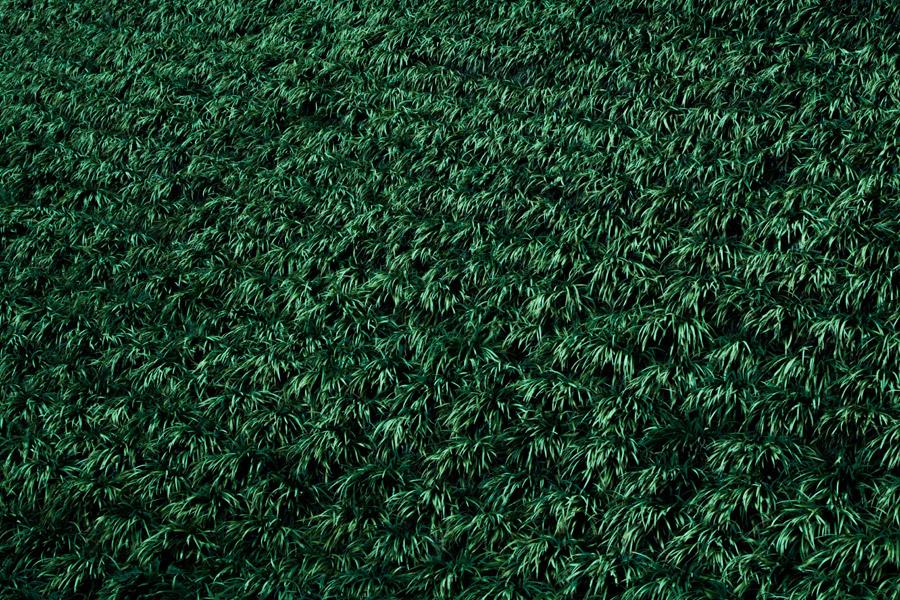 フリー写真 一面に生えた緑の草の風景