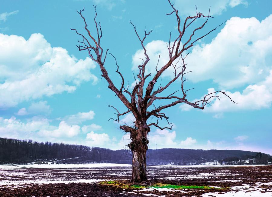 フリー写真 一本の枯れ木と青空の風景