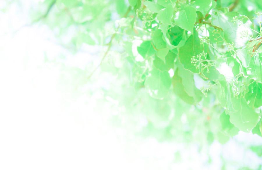 フリー写真 緑色の葉っぱ