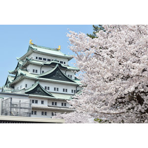 フリー写真, 風景, 建造物, 建築物, 城, 名古屋城, 愛知県, 日本の風景, 桜(サクラ), 春