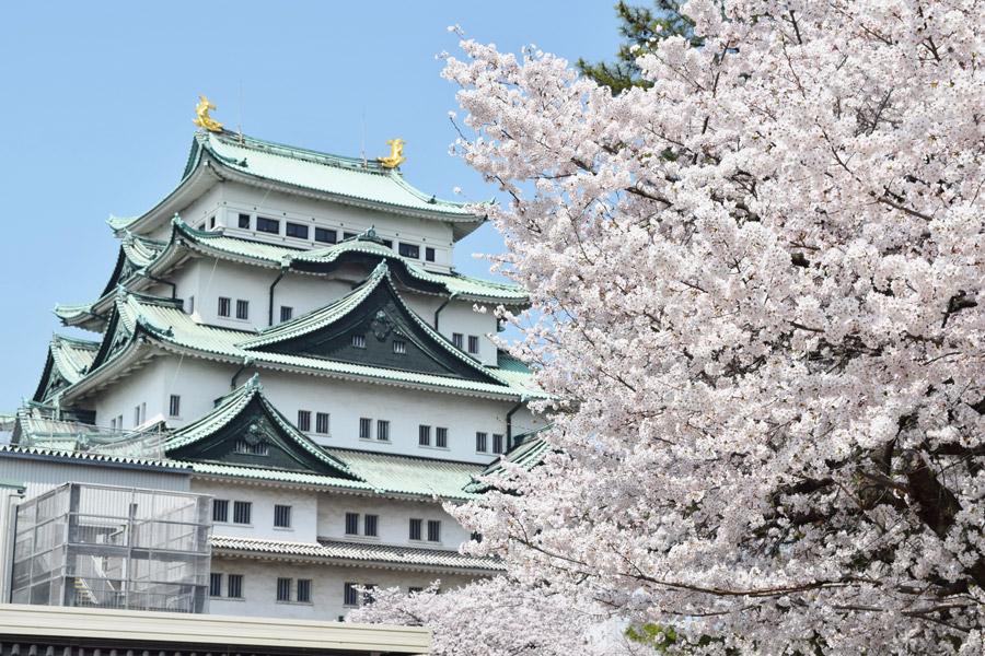 フリー写真 名古屋城と桜の花の風景