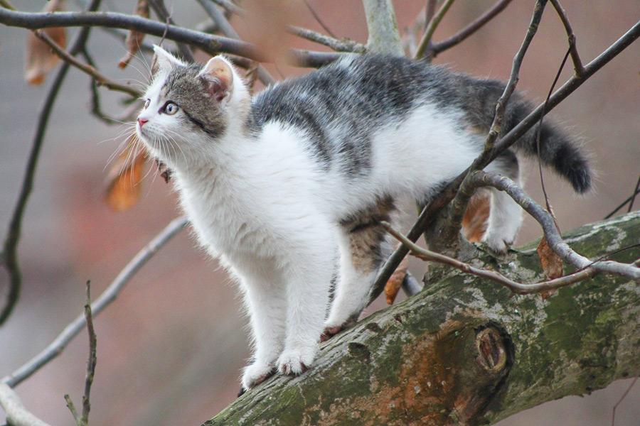 フリー写真 木の上の子猫