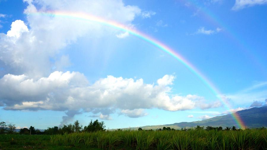 フリー写真 草むらとダブルの虹の風景