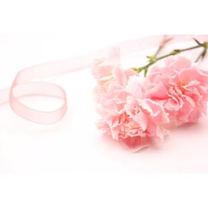 フリー写真, 植物, 花, カーネーション, ピンク色の花, プレゼント, リボン, 年中行事, 母の日, 5月