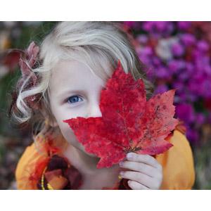 フリー写真, 人物, 子供, 女の子, 外国の女の子, アメリカ人, 葉っぱ, もみじ(カエデ), 落葉(落ち葉)